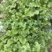 シュウパリの冬野菜。